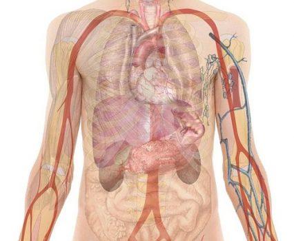 anatomy-254129